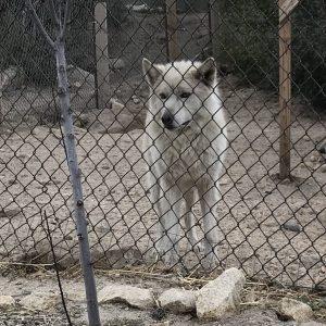 wolfdaycharlee
